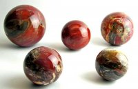 examples of petrified wood